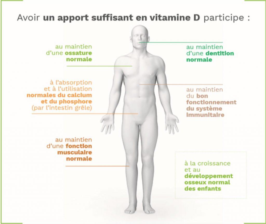 dplantes-Schéma1